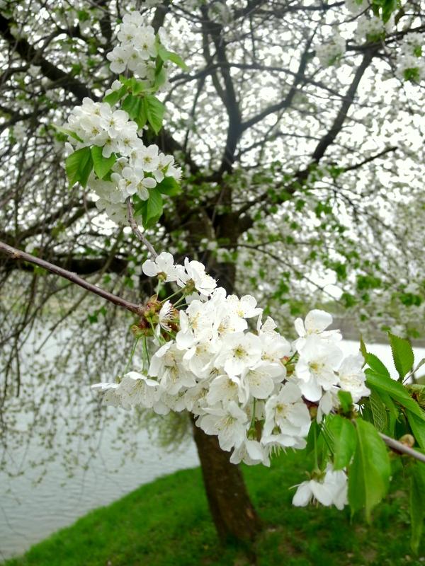 Květy