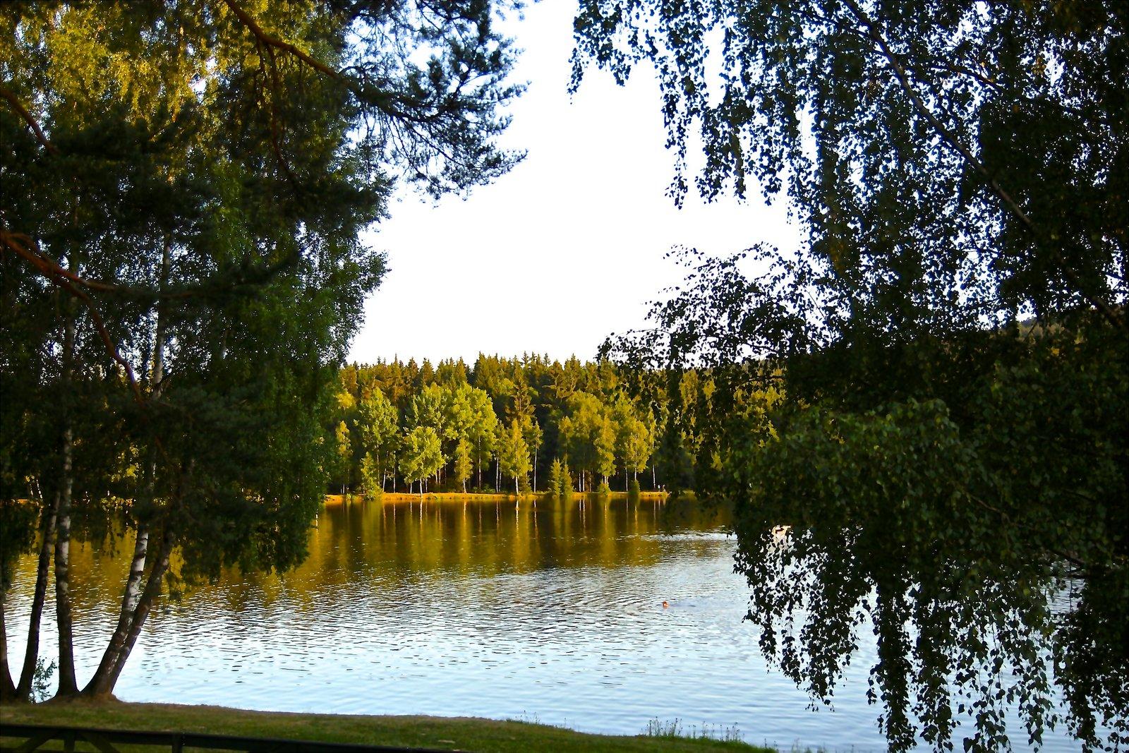 Rybník uprostřed lesů